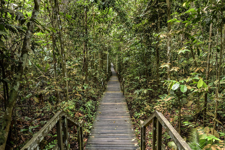Empty boardwalk amidst bamboo groves at forest