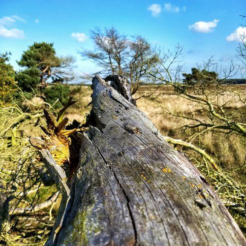 Beauty of dead wood ;-)