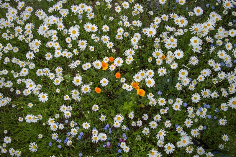 Close-up of fresh flowers blooming in nature