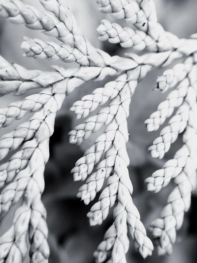 Monochrome Photography Selective Focus Nature Growth Day Beauty In Nature Full Frame Botany Focus On Foreground Outdoors Tranquility Extreme Close-up New Life Springtime No People Maximum Closeness Macro Photography Macro
