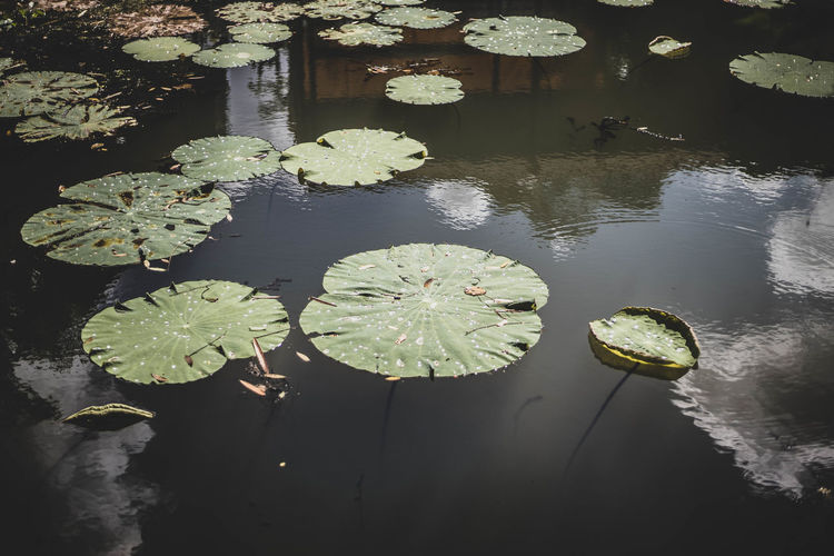 High angle view of lily pads floating on lake