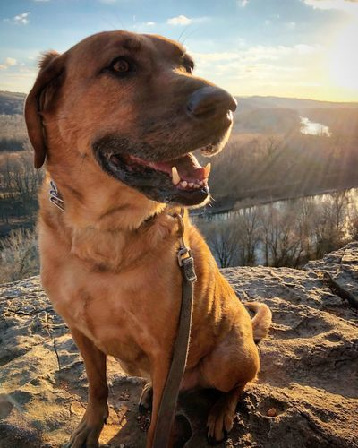 Bluffs Sun Dog Pets Domestic Animals Animal Themes One Animal Mammal Day Outdoors Close-up Nature EyeEm Ready