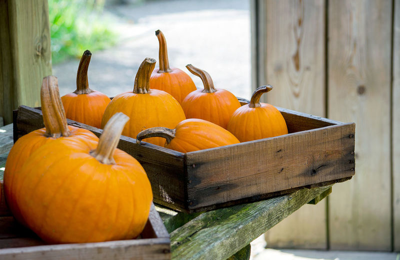 wood boxes hold round orange pumpkins for halloween and fall decorations Autumn Fall Beauty Fall Colors Halloween Michigan Pumpkins Rustic Thanksgiving USA Vegetables & Fruits Wood Boxes Day Decorations Decorative Food Freshness Gourds Orange Color Potting Shed Seasonal