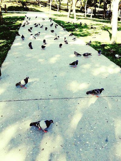 Uçun Kuşlar Uçun Doğduğum Yere şimdi Dağlarımda Mor Sümbül Vardır Ormanlar Koynunda Bir Serin Dere Dikenler Içinde Sarı Gül Vardır. Uçun Kuşlar Uçun Burda Vefa Yok öyle Akar Sular, öyle Hava Yok Feryadıma Karşı Aksi Seda Yok, Bu Yangın Yerinde Soğuk Kuşlarmıkiçokşeydenildişairdilinde Güvercinler 😵😱🐥🐤🐣🌴🌿🍃🍁 Kuslarin Dunyasi Birds🐦⛅ Beautiful Birds EyeEm Birds The Birds Eyemphotography Eyem