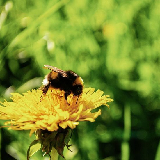 """""""Пришло лето, и ветер был летний — теплое дыхание мира, неспешное и ленивое. Стоит лишь встать, высунуться в окошко, и тотчас поймешь: вот она начинается, настоящая свобода и жизнь, вот оно, первое утро лета."""" С летом, вас, друзья!🙋🙋 {""""It's summer, and the wind was a summer - warm breath of the world, slowly and lazily. One has only to stand up, lean out the window and immediately understand: here it begins, true freedom and life, here it is, the first morning of summer."""" Since the summer, you guys! 🙋🙋}"""