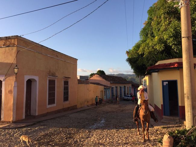 Streets Of Trinidad Gaucho on the phone, Street Dog Walking The Streets Golden Hour Lotti On Tour