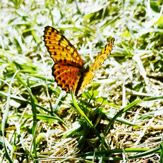 Butterfly - Insect Outdoors Nature Butterfly Animal Wildlife Beauty In Nature