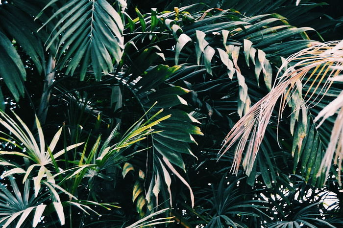 Plantas Green Color Garden Plant Leaf Growth Nature No People Beauty In Nature Outdoors EyeEmNewHere