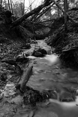 Long exposure Nature Tree Forest Tranquility Beauty In Nature Tranquil Scene Scenics Water Non-urban Scene Outdoors Idyllic Tree Trunk No People Landscape Day Stream - Flowing Water Fineart_photo Sunlight Canon70d Cold Temperature Arts Culture And Entertainment Waterfall Tree Area Branch Tranquility