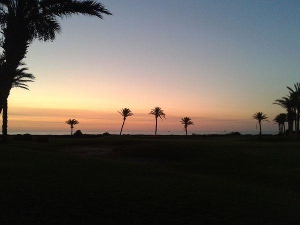 On the beach... No. 3 pic Dominogirl Sunset Palm Tree Twilight Sky Path Sunshine Sun View Beach Coastline