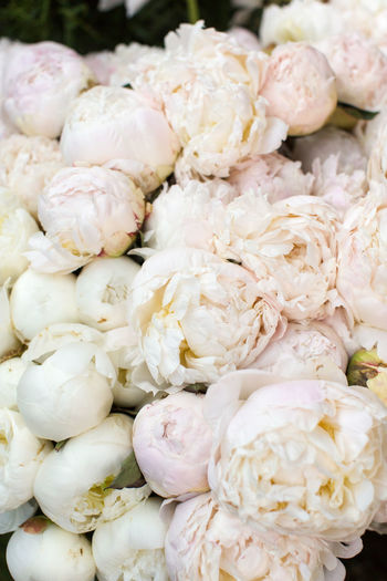 Close-up of white flowers for sale in market