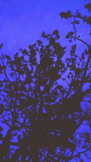 Trews Wooded Trunk Leafs Night Night Blue Blue