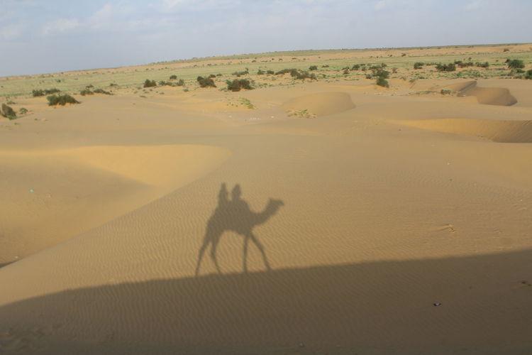 Desert Plants Deserts Around The World Alone In Desert Camel Desert Beauty Landscape Shadow Thar Desert An Eye For Travel