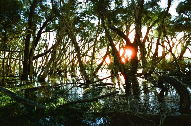 Amongst the swamp Magichour Swamp Lake Tree Nature Tranquil Scene Tranquility Beauty In Nature Forest Outdoors Scenics Sunlight WoodLand Tree Trunk No People Lush Foliage Sun Landscape Sunset Travel Destinations Day Silhouette Water