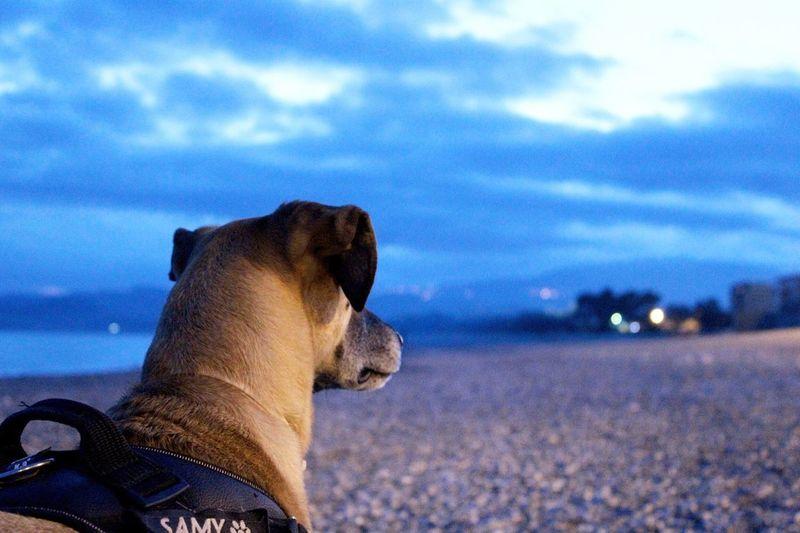 Scrutiamo l'orizzonte Dog Samy Cane Day Photography Photo Canon Canon1200d Photoshoot Shoot Reflex Mare Cielo Sky Sky And Clouds