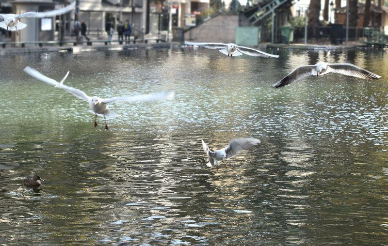 birds on the Paris canal Animal Themes Bird Canel Day Gull Outdoors Paris Paris ❤ Paris, France  Sun Water