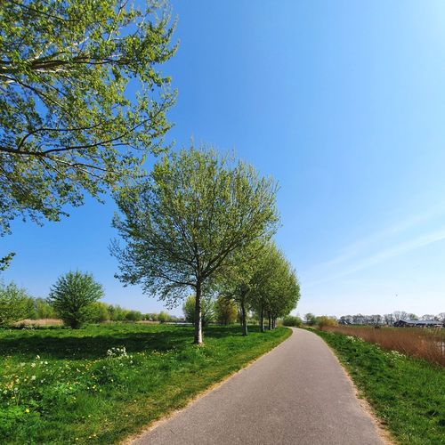 Road by trees on field against blue sky