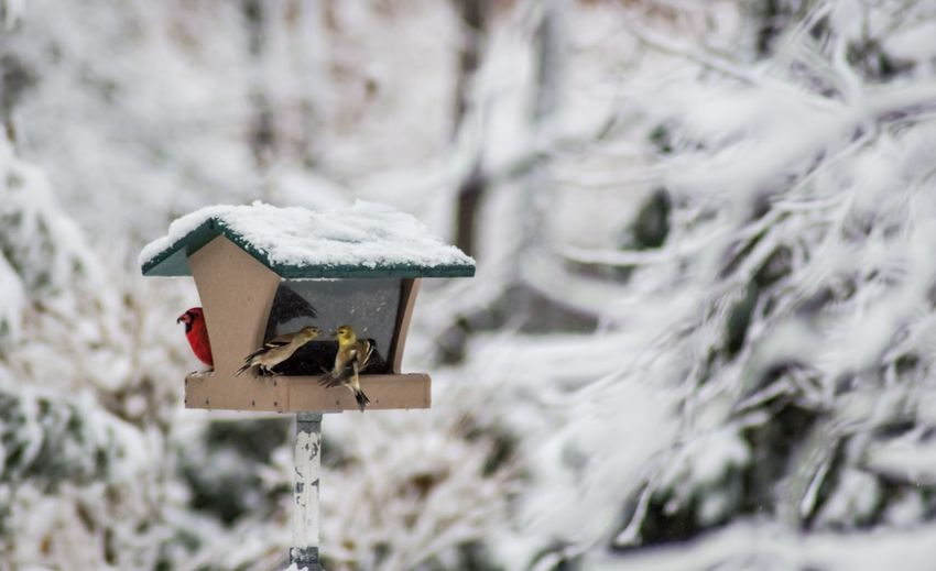 Close-up of bird perching on birdhouse during winter