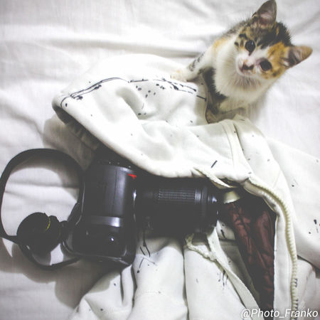 Camera Animal Themes Bed Day Domestic Animals Domestic Cat Feline Indoors  Mammal No People One Animal Pets