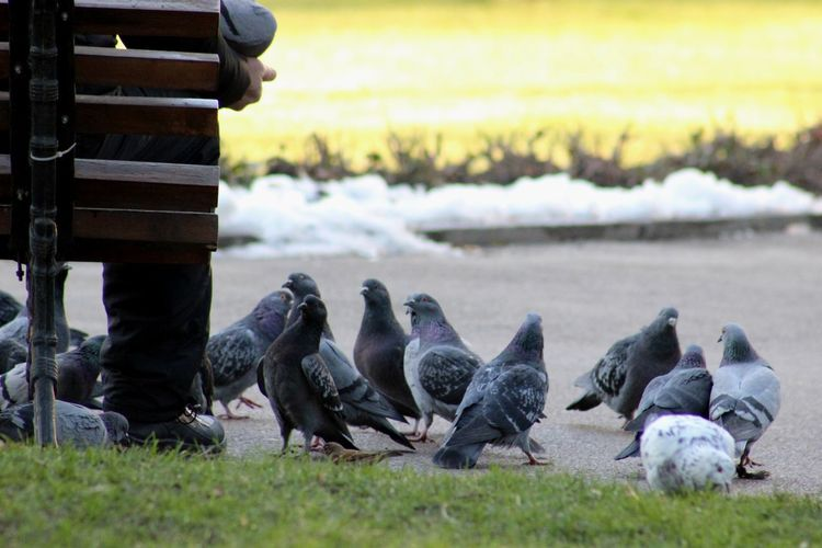 Pigeons Perching On Footpath