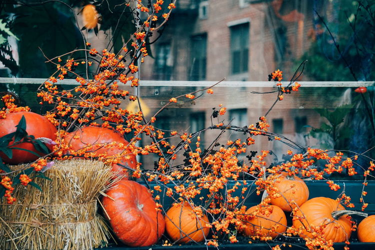Close-Up Of Artificial Pumpkins And Decorations During Autumn