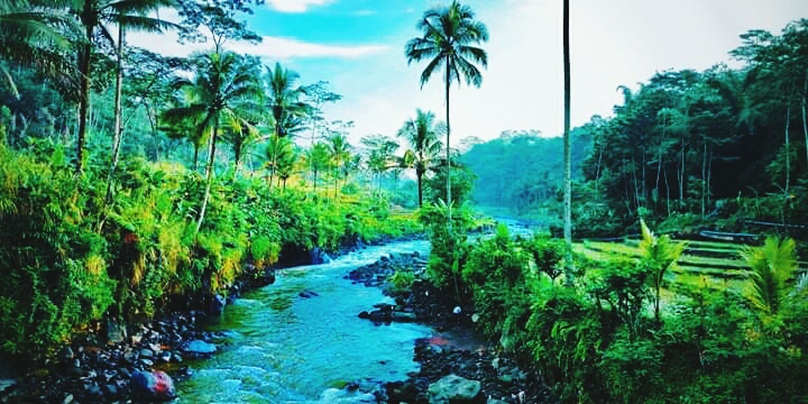 tree, plant, nature, tranquility, palm tree, water, tranquil scene, scenics - nature, green color, beauty in nature, growth, tropical climate, sky, land, environment, day, forest, no people, cloud - sky, outdoors, coconut palm tree, pollution, tropical tree, rainforest