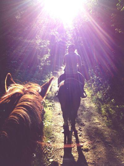 Horses Riding Cute♡ Enjoying The Sun