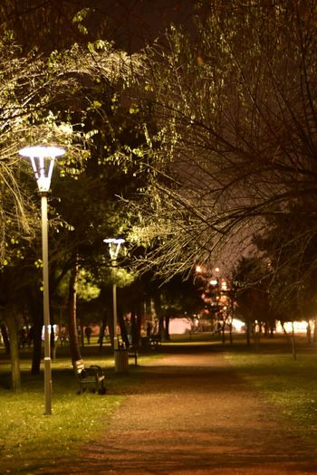 Tree Night Illuminated Nature No People Built Structure Outdoors Growth Architecture Building Exterior City Bank Autumn Autumn🍁🍁🍁 Lonely Loneliness Lonelyness Nightphotography Leaves Landscape EyeEm Best Shots EyeEm Gallery Nofilter Bursa / Turkey Night Photography