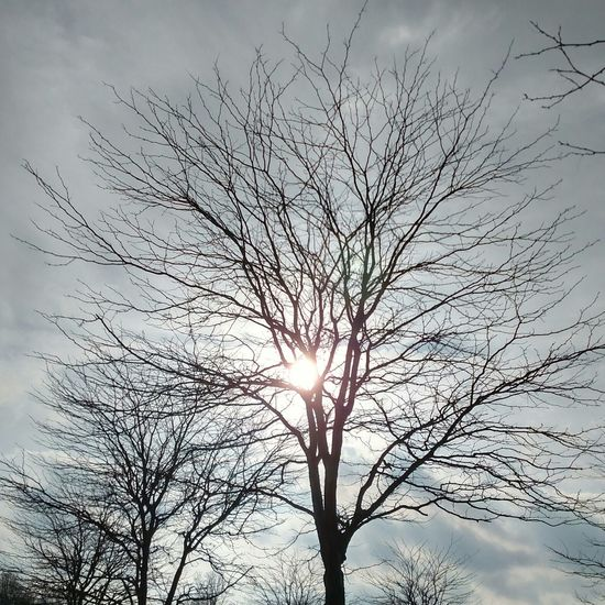Tree_collection  Tree And Sky Today's Weather Report Bare Trees Bare Branches A Beautiful Day MAY GOD BLESS US ALL