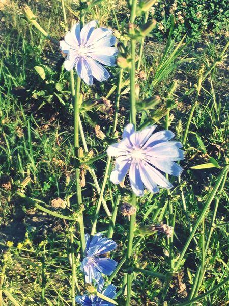 Urban Filter 3 Windblown Flowers Purple Flower Beauty In Nature Beauty Redefined Wildflower Purple Wildflower
