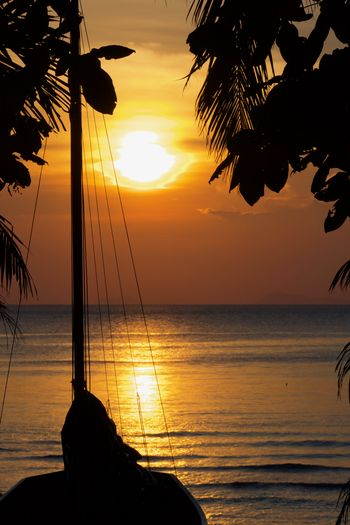 Water Sky Sunset Sea Horizon Horizon Over Water Scenics - Nature Beauty In Nature Silhouette Tranquil Scene Tropical Climate Tranquility Nature Tree Palm Tree Outdoors Palm Leaf Silhouettes Sailboat Koh Samui,Thailand Travel Destinations Evening Light Shore