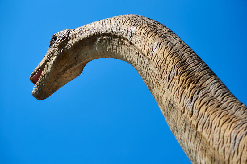 Algar, Spain - April 8, 2017: Realistic model of a Diplodocus dinosaur against blue sky background. DinoPark Algar is a unique entertainment and educational park. Spain älgar Dino DinoPark Dinosaur Giant Jurassic Park SPAIN Amusement Park Blue Sky Day Dino Park Diplodocus Entertainment Park Extinction Animals Herbivorous Jurassic Period Long Neck  No People One Animal Outdoors Paleontology Park - Man Made Space Prehistoric Realistic Sunny Day