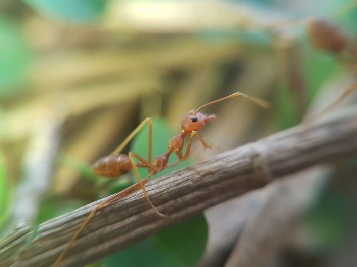 relaxing Samsung Galaxy S7 Edge S7 Edge Photography Macro Photography Macro Macro_collection Macro Beauty Macro Nature Macrophonegraphy Macro Insects Ants At Work Ants Ant's View Ant's Perspective Ant's Life Ants Life Antslife Insects  Insect Leaf Colony Summer Close-up Ant