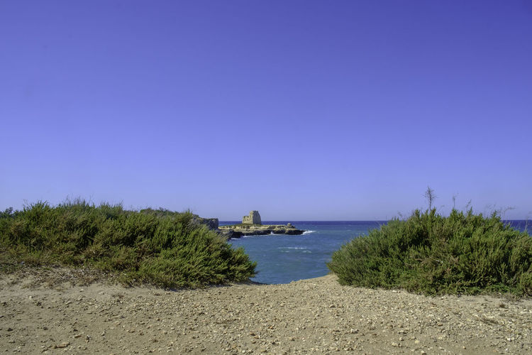 Beach Beauty In Nature Blue Clear Sky Day Grass Growth Italy Lecce Melendugno Nature No People Outdoors Puglia Salento Salento Puglia Sand Scenics Sea Sky Tranquil Scene Tranquility Tree Water