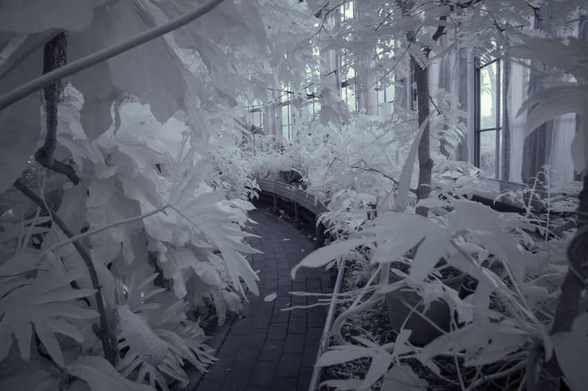 Architecture Botanical Gardens Built Structure Copenhagen Day Denmark Flower Forest Indoors  Infrared Infrared Photography Leaf Nature Nature Nature Photography No People Park Plant Tree White Winter Woods