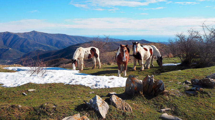 Panoramic view of horse cart on rock