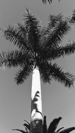 Black and white Palm Trees Street Plants On The Wall No People Tree City Sky Architecture Built Structure Building Exterior Street Scene White Line