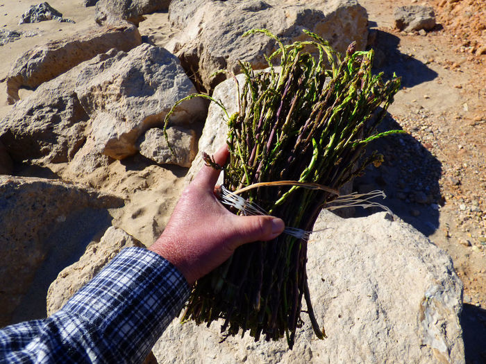Cropped hand of man holding asparagus on rock