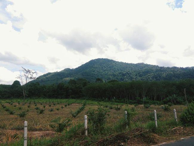 ภูเขา Tree Mountain Rural Scene Agriculture Field Vineyard Sky Landscape Cloud - Sky
