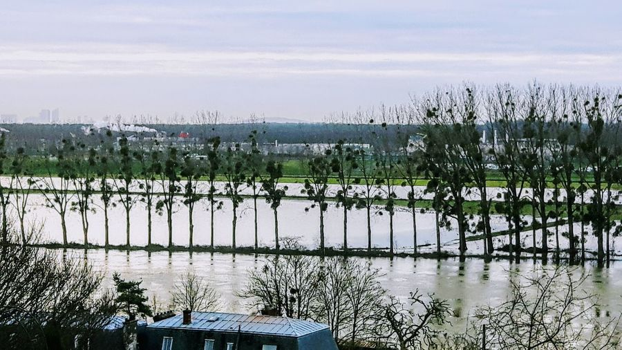 Flood River Flooded Landscape Trees Morning Light View From Above Eye4photography  EyeEm Gallery