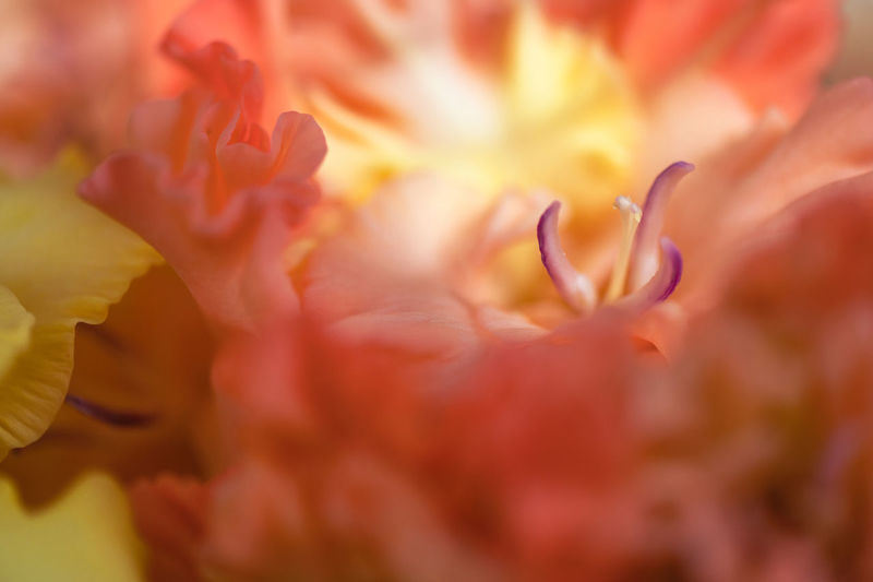 Full frame shot of pink flowering plant