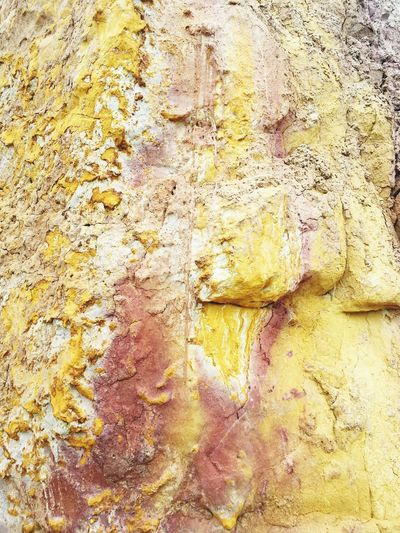 Detail shot of rock on tree trunk