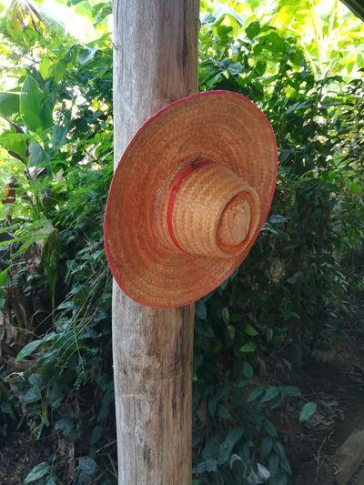 hat Hat Tree