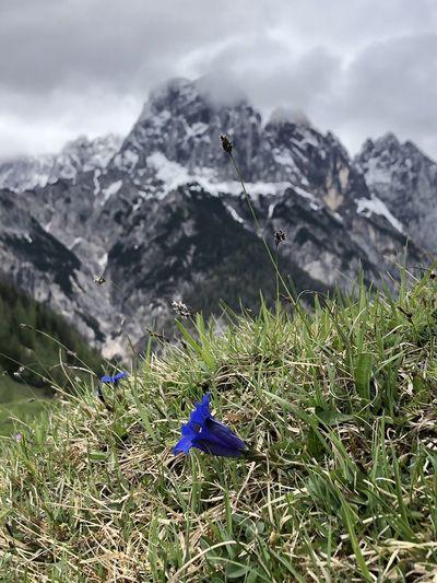 Blue flower on field