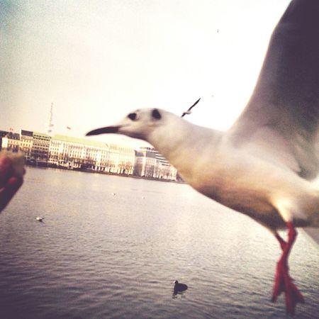 Möwenhappen🐦💙 Möwenleckerbissen Möwe Jungfernstieg Taking Photos Seagulls Photography Followme Hamburg Animals BirdsBird