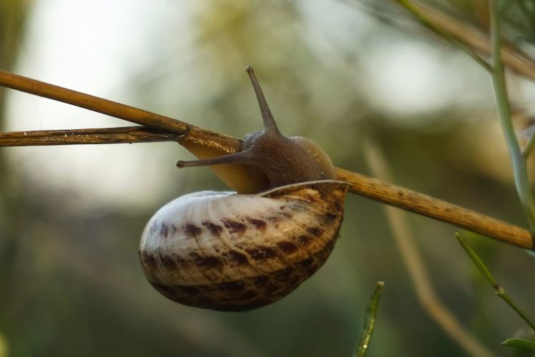 Close-up of snail on tree