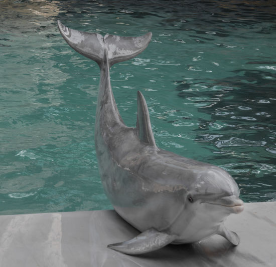Aquatic Mammal