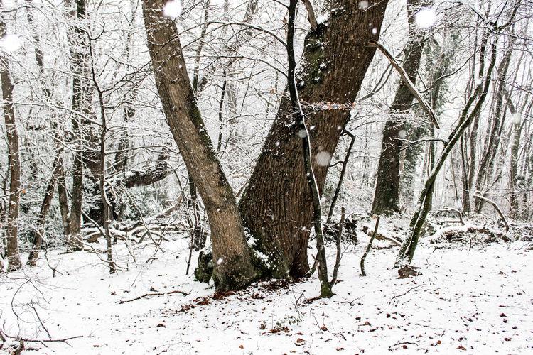 Chien♥ DimancheMatin Foret Nature Neige Promenade♡ Arbres Blanc Bois Flocon❄️ Payasage HARIBO♡