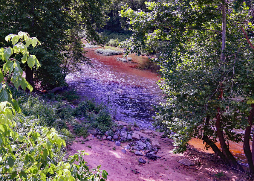 Shots of the South Anna Bird Branches Channel Dam Day Fall FIH Fishing Flowing Water Green Color Mud Nature No People Outdoors Picture Of Red River Rocks Scenics Shore Streamzoofamily Tree View Water Wood