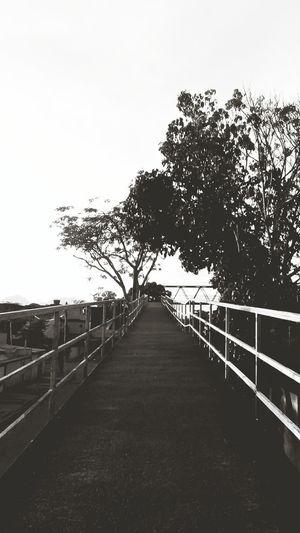 Bridge Honório Gurgel No People Sky Tree Day Outdoors Nature Flower Bkackandwhite Black And White Friday